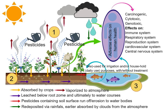 Persistence of pesticides-based contaminants in the