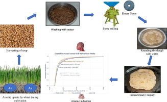 Wheat Is An Emerging Exposure Route For Arsenic In Bihar India