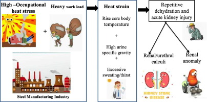Risk Of Kidney Stone Among Workers Exposed To High Occupational Heat Stress A Case Study From Southern Indian Steel Industry Sciencedirect