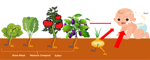 Remediation Of An Urban Garden With Elevated Levels Of Soil Contamination Sciencedirect