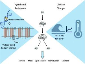 Fitness Costs Of Pesticide Resistance In Hyalella Azteca Under Future Climate Change Scenarios Sciencedirect