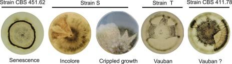 a helminthosporium maydis kémiailag szabályozza a genitális szemölcsök kriodestrukciója mi az