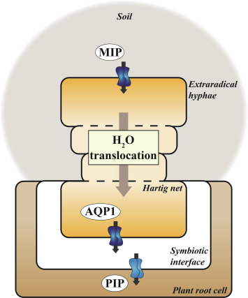 bovini an overview sciencedirect topicssign in to download hi res image