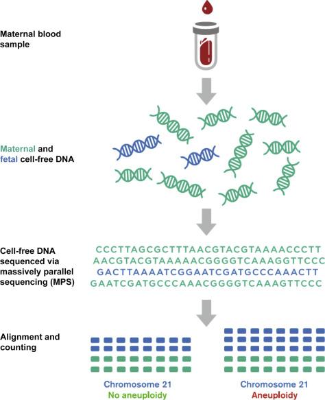 Cell-Free Fetal DNA Testing for Prenatal Diagnosis - ScienceDirect