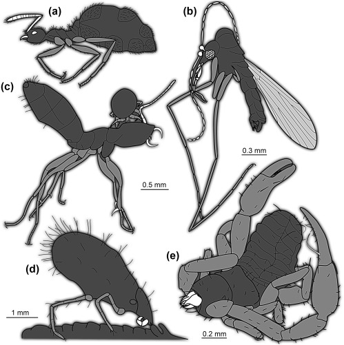 Parasitic Mites - an overview | ScienceDirect Topics