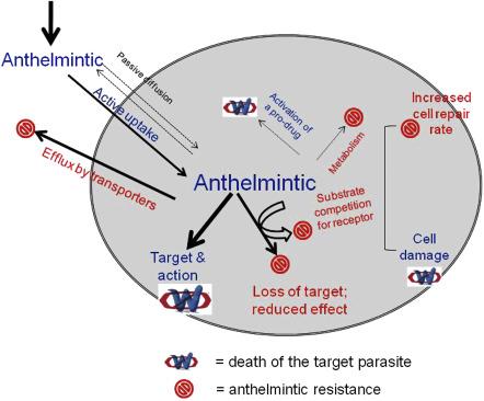 anthelmintic response definition)