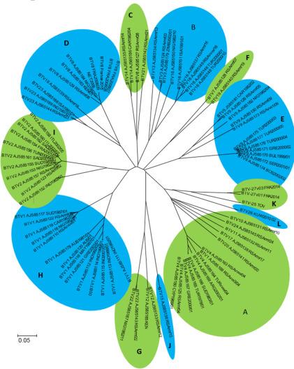 Bluetongue Virus: From BTV-1 to BTV-27 - ScienceDirect