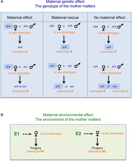 Phenotypic Evolution With And Beyond Genome Evolution Sciencedirect
