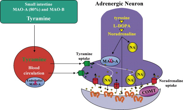 monoamine oxidase a and b inhibitors in parkinson s disease