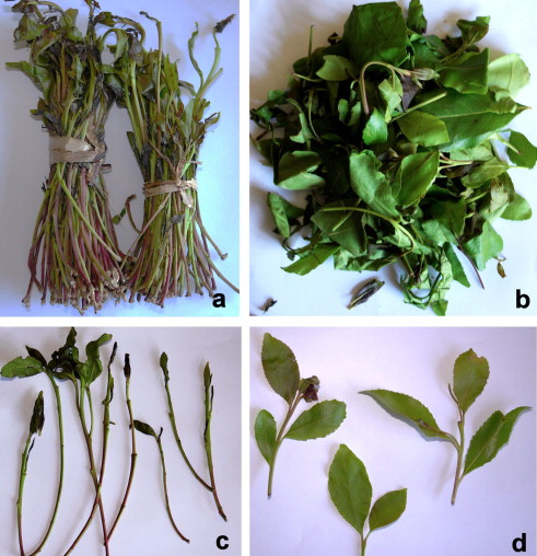 Khat - an overview | ScienceDirect Topics