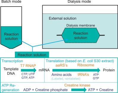 Protein Biosynthesis An Overview Sciencedirect Topics