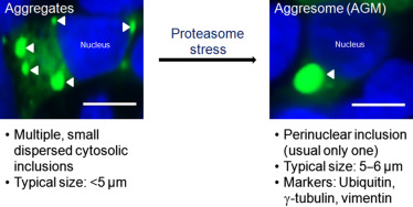 Fluorescence Microscopy - an overview | ScienceDirect Topics