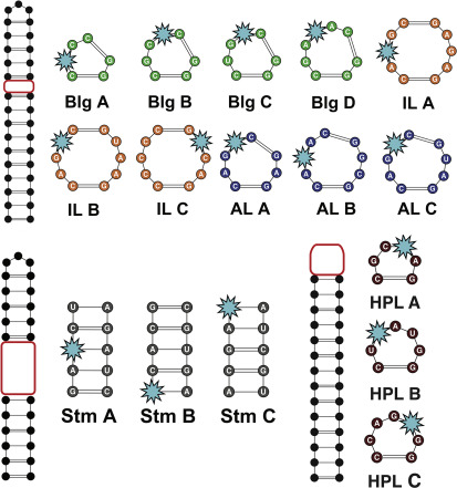 Differentiation and classification of RNA motifs using small