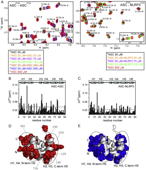 Protein Interactions Of The Inflammasome Adapter Asc By Solution