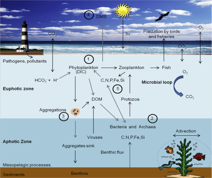Ocean Acidification And Marine Microorganisms Responses And