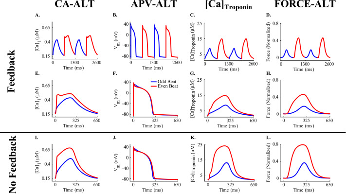 Rate-dependent force, intracellular calcium, and action potential