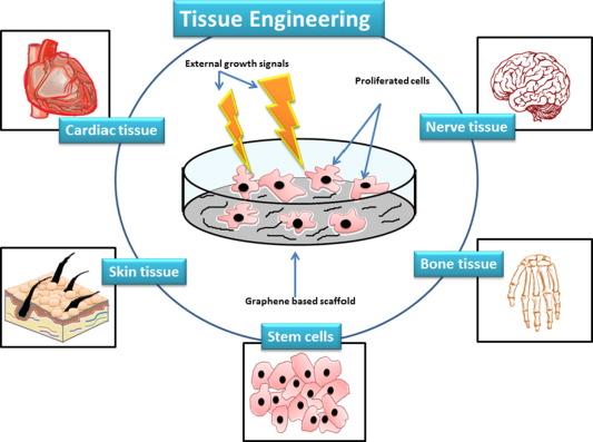 Graphene A Versatile Platform For Nanotheranostics And Tissue Engineering Sciencedirect