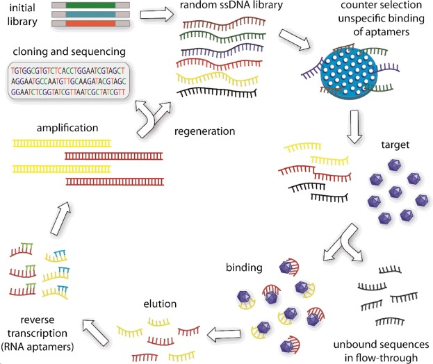 Modular fabrication of intelligent material-tissue