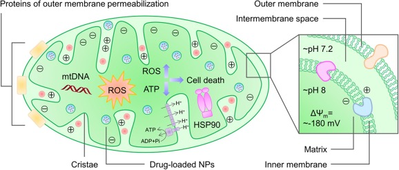 Multifunctional Nanoplatforms For Subcellular Delivery Of Drugs In