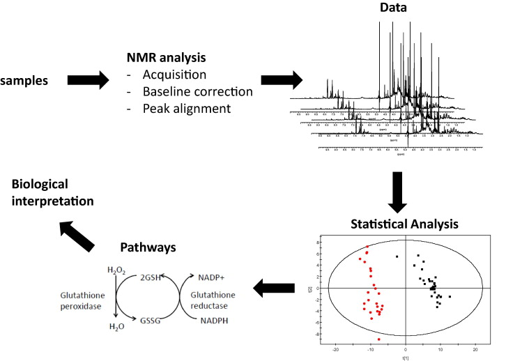 NMR-based metabolomics: From sample preparation to