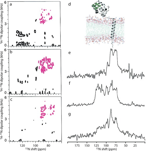 Solid-state NMR methods for oriented membrane proteins - ScienceDirect