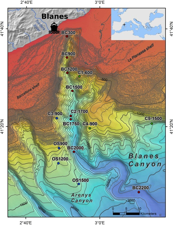 Spatial Distribution Of Sedimentation Rate Increases In Blanes