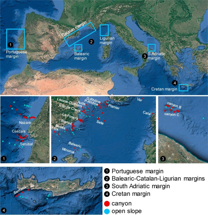 Meiofaunal biodiversity in submarine canyons of the