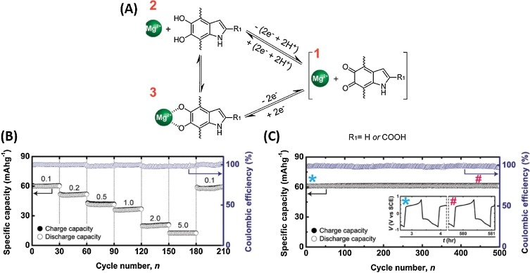 Recent Advances In The Synthesis Of Catechol Derived Biopolymers
