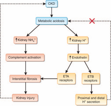 A Basic Approach To Ckd Sciencedirect