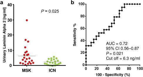 Proteomic-based research strategy identified laminin subunit