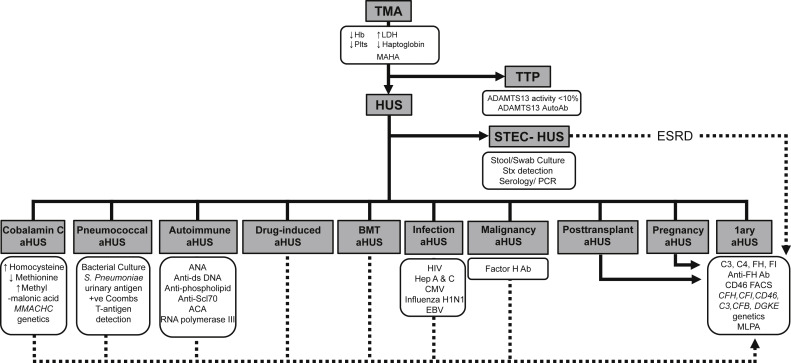 Atypical hemolytic uremic syndrome and C3 glomerulopathy