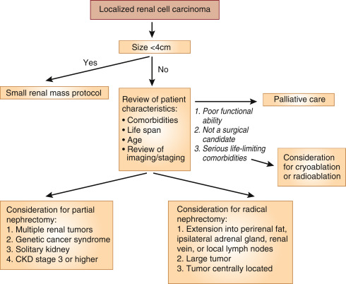 Renal Cell Carcinoma For The Nephrologist Sciencedirect