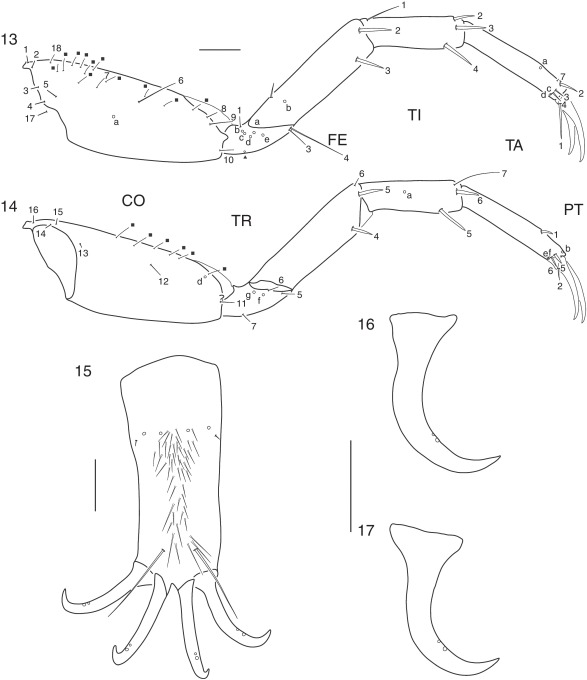 First Larval Description And Chaetotaxic Analysis Of The Neotropical