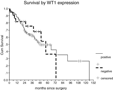Expression Of Wilms Tumor Gene Wt1 In Epithelial Ovarian Cancer Sciencedirect