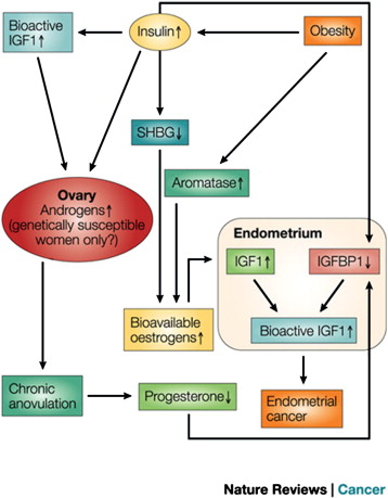 Endometrial cancer and obesity, Detecting and Treating Endometrial Cancer oxiuros na gravidez