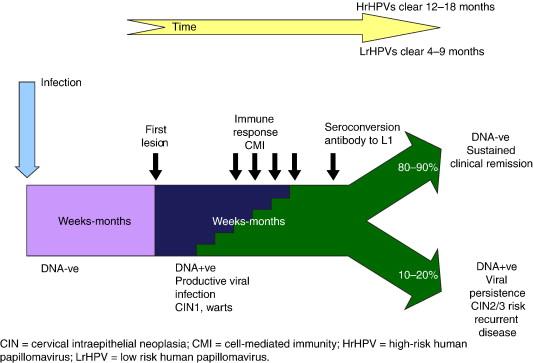 human papillomavirus infection etiology and pathogenesis copiii se simt bolnavi