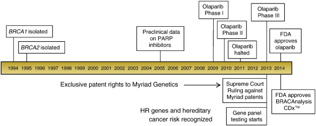 Two Decades Beyond Brca1 2 Homologous Recombination Hereditary Cancer Risk And A Target For Ovarian Cancer Therapy Sciencedirect