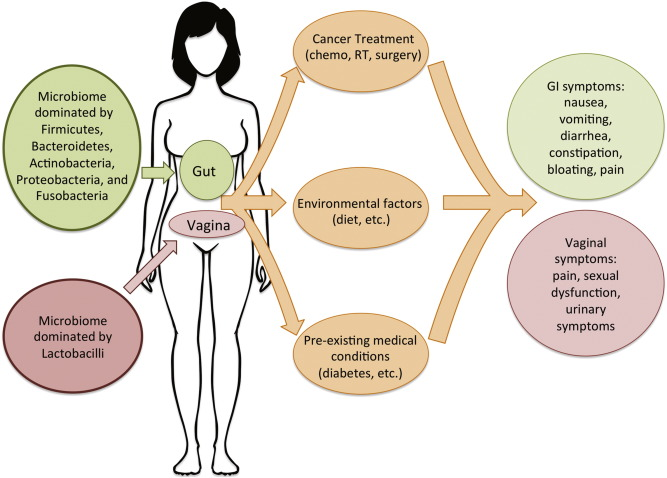 The vaginal and gastrointestinal microbiomes in gynecologic