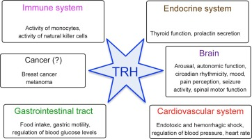 The Forgotten Effects Of Thyrotropin Releasing Hormone Metabolic Functions And Medical Applications Sciencedirect