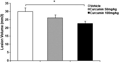 Curcumin pretreatment attenuates brain lesion size and improves