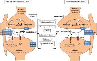 Glt 1 Transporter An Effective Pharmacological Target For Various