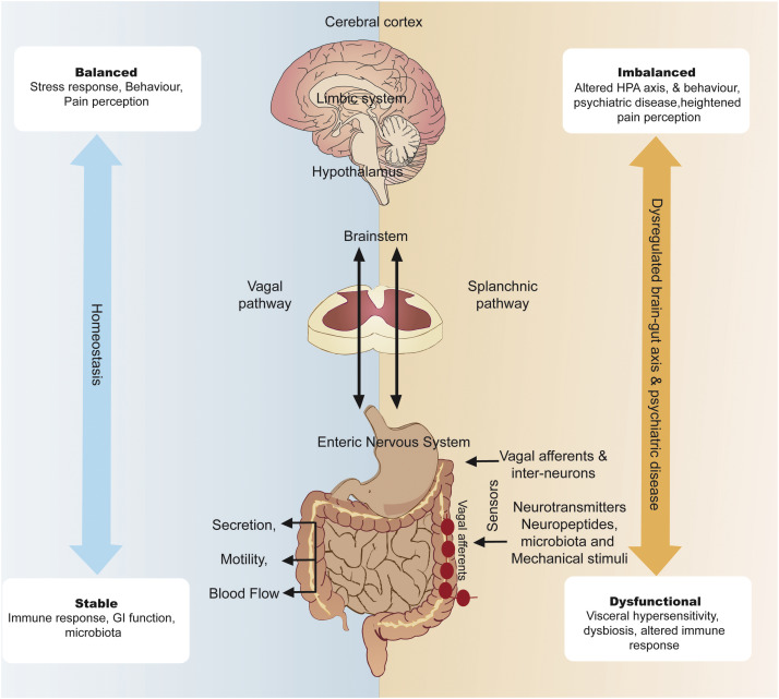 The Microbiome And Disorders Of The Central Nervous System