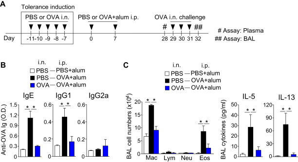 IL-33 dysregulates regulatory T cells and impairs