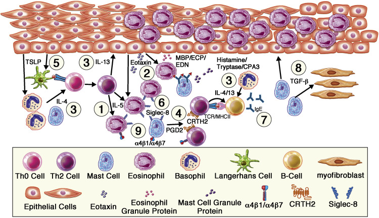Biological therapies for eosinophilic gastrointestinal diseases