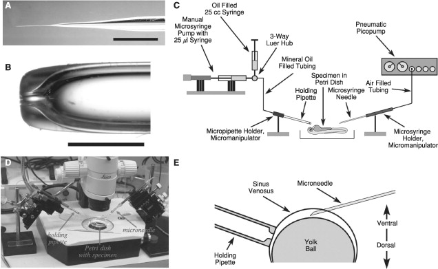 Microangiography - an overview | ScienceDirect Topics
