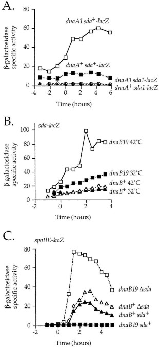 Replication Initiation Proteins Regulate a Developmental