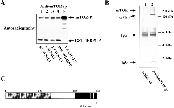 Raptor, a Binding Partner of Target of Rapamycin (TOR), Mediates TOR