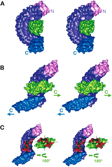Structure Of Internalin A Major Invasion Protein Listeria Monocytogenes In Complex With Its Human Receptor E Cadherin Sciencedirect