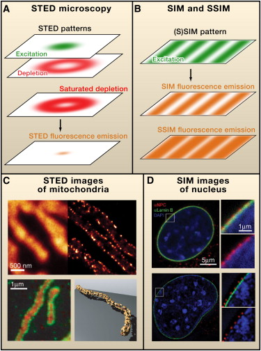Breaking the Diffraction Barrier: Super-Resolution Imaging