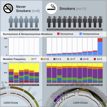 Genomic Landscape of Non-Small Cell Lung Cancer in Smokers